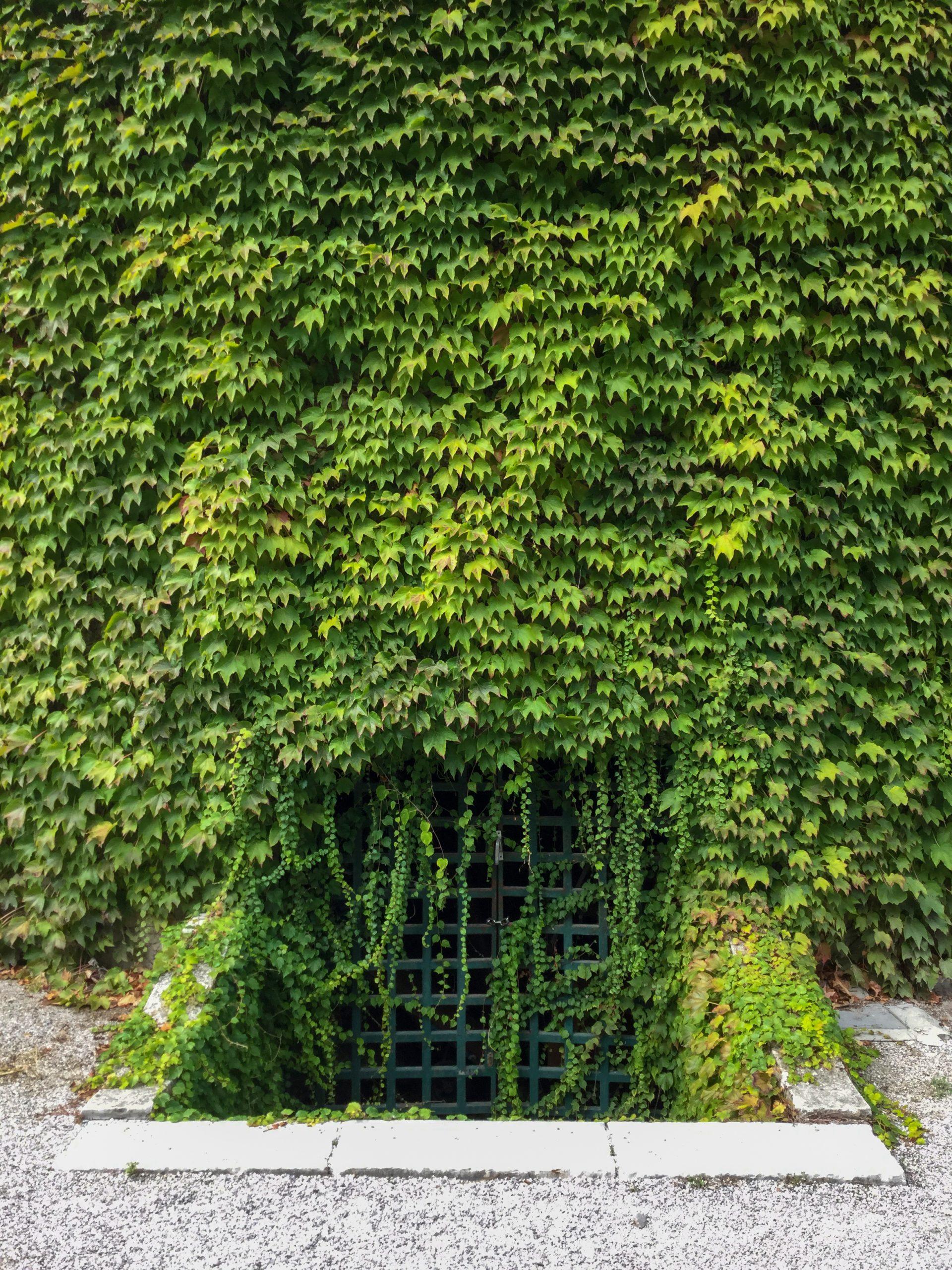 Potentially Dangerous Crawlspace Entrance Halifax