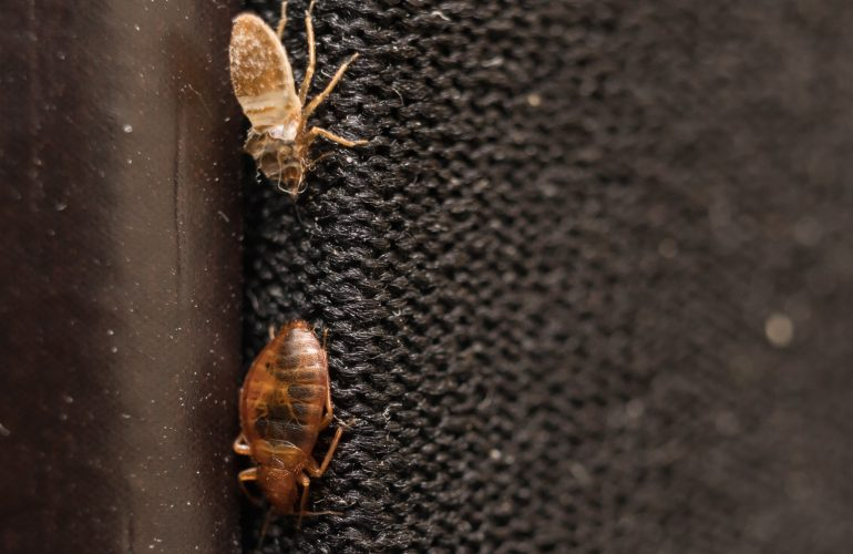 Prevent-Bedbugs-Halifax-NS